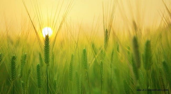 İthalata Dayalı Tarım